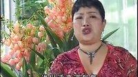 云南山歌电视剧全集