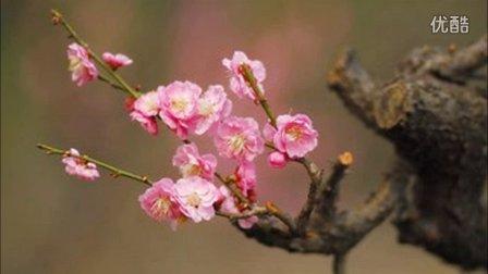 中国经典葫芦丝独奏曲精选
